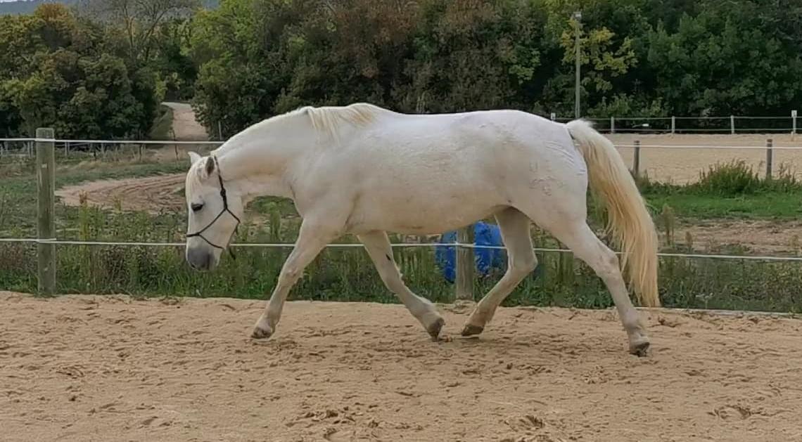 Pas de dos, pas de cheval !